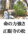 012yamakawa-matsu108X145